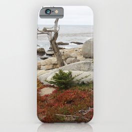 Dead Cypress At Pebble Beach iPhone Case