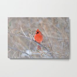 Fire in the Winter (Northern Cardinal) Metal Print