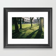 Tree shadows Framed Art Print