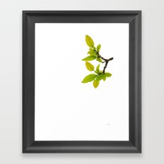 A Touch of Spring Framed Art Print