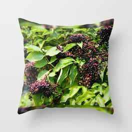 Elderberry fruits fresh clusters Throw Pillow