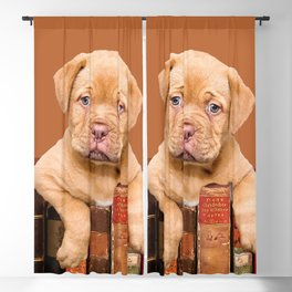 Old Books and Bordeaux Bulldog puppy Blackout Curtain