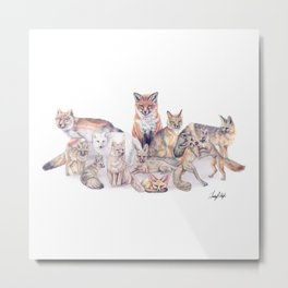 Foxes of the World Metal Print