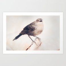 Little Capitola Bird Art Print