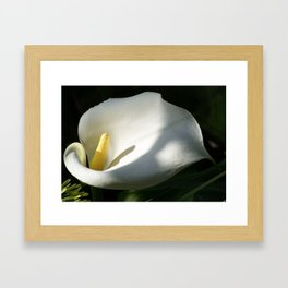 White Calla Lilies Over Black Background In Soft Focus Framed Art Print