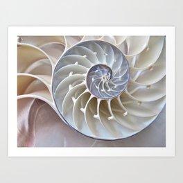 Nautilus Shell Kunstdrucke