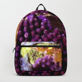 Unidentified Backpack