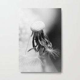 Dandelion 2013 no.4 Metal Print