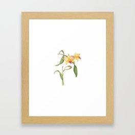 Flowering yellow cattleya orchid plant Framed Art Print