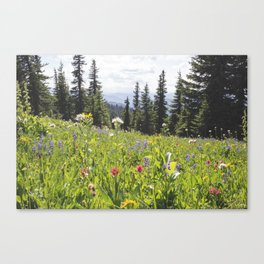 Sub-alpine Meadow Canvas Print