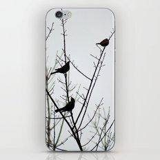 Resting Birds iPhone Skin