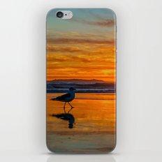 Seagull Sunset iPhone & iPod Skin