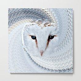 Barn Owl Portrait (Tyto Alba) Metal Print