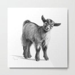 Goat baby G097 Metal Print