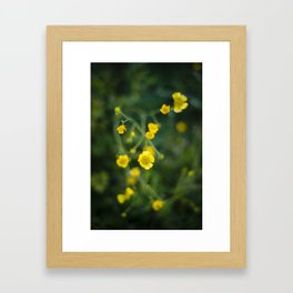 Buttercups and fly Framed Art Print