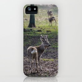Roe Deer on Jeju Island iPhone Case