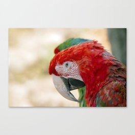 Green Winged Macaw Portrait Canvas Print
