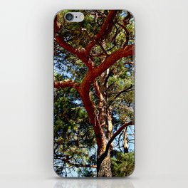 Autumnal lure of the forest iPhone Skin