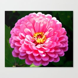 Floral Beauty #3 Canvas Print