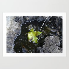 Floating leaf Art Print
