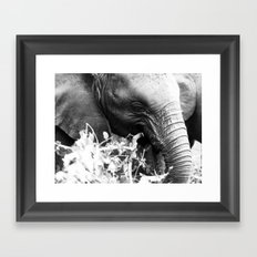 Young elephant feeding in black and white Framed Art Print