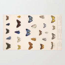 Vintage Hand Drawn Scientific Illustration Insects Butterfly Anatomy Colorful Wings Rug