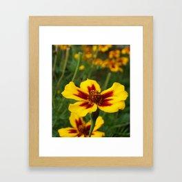 Yellow Marigold Flowers Framed Art Print