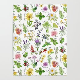 Plants & Herbs Alphabet Poster