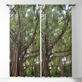 Banyan Beauty Blackout Curtain