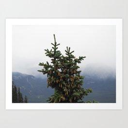Canadian Spruce Art Print