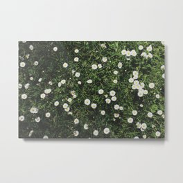Daisies in Letchworth Metal Print