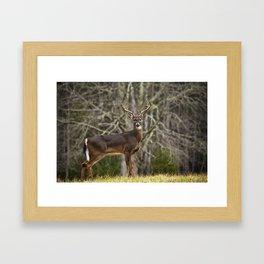 White Tailed Deer Eight Point Buck Framed Art Print
