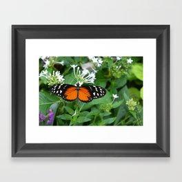 Orange and Black Butterfly Framed Art Print