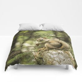 Who You Calling Squirrelly? Comforters