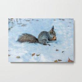 Tasty nut Metal Print