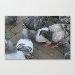 Pigeon Party! Canvas Print