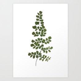 Växt Art Print