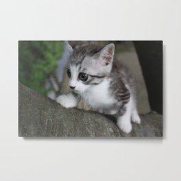 Kitten to climb a tree Metal Print