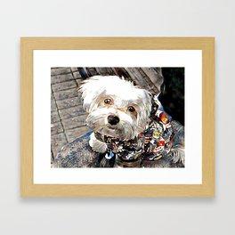 adorable little puppy Framed Art Print