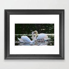 Swan family Framed Art Print