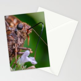 Happy Silver Spotted Skipper Butterfly. Macro Butterfly Photograph Stationery Cards