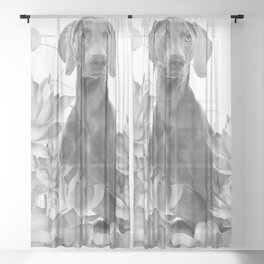 Weimaraner Dog Lotos Flowers - Black & White #society6 #lotos Sheer Curtain