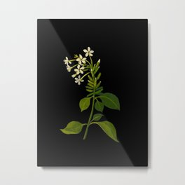 Plumbago Zeylanica Mary Delany Floral Paper Collage Delicate Vintage Flowers Metal Print