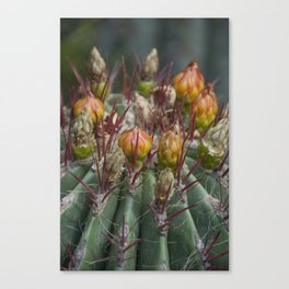 Prickly beauty Canvas Print