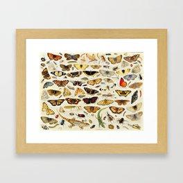 "Jan van Kessel the Elder ""An Extensive Study of Butterflies, Insects and Seashells"" Framed Art Print"