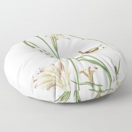 Plantae Selectae No. 39 –Lilio Gladiolus or Sword Lily by Georg Dionysius Ehret Floor Pillow
