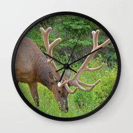 Elk with his velvet in Jasper National Park Wall Clock