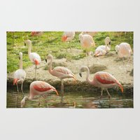 flamingos Area & Throw Rugs featuring Flamingos by Sandy Broenimann