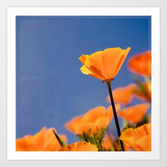 Poppies on Blue Art Print