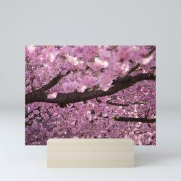 Cherry Blossom Tree Panorama Mini Art Print